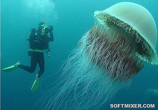 Десять самых опасных медуз