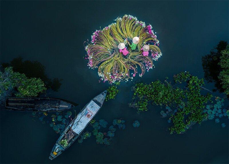 """1-ое место в категории """"Интересное"""", """"Цветы на воде"""" конкурс, красиво, лучшие, съемка дроном, уникальные виды, фотографии"""