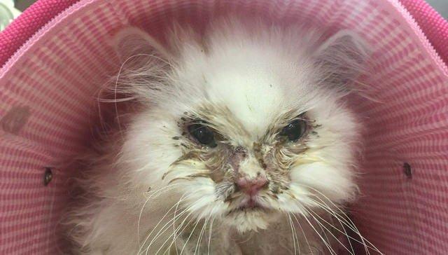 """""""Мы его не примем, он безнадежен!"""" Кота-красавца по кличке Джон Сноу везде советовали усыпить, но Рейчел упрямо говорила """"нет!"""""""