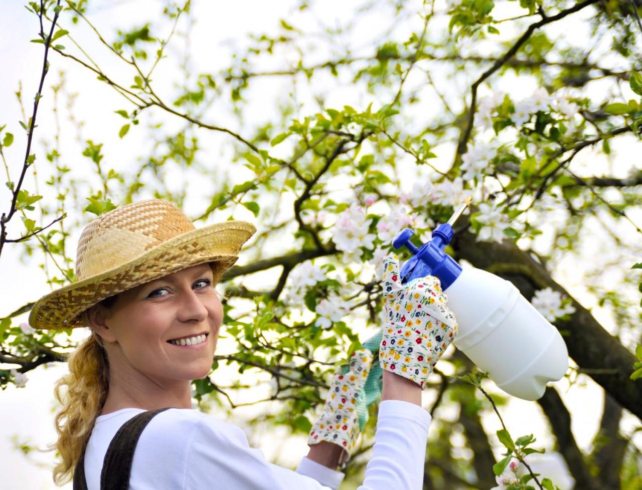 Чем опрыскать сад до и после цветения