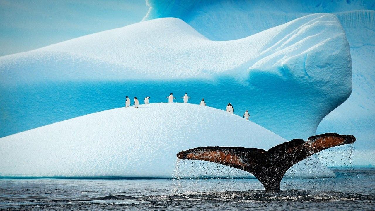 Удивительные фотографии со всего света