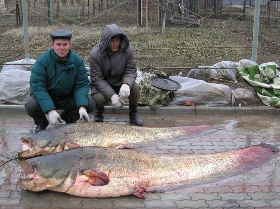 рыбалка на дону в ступино