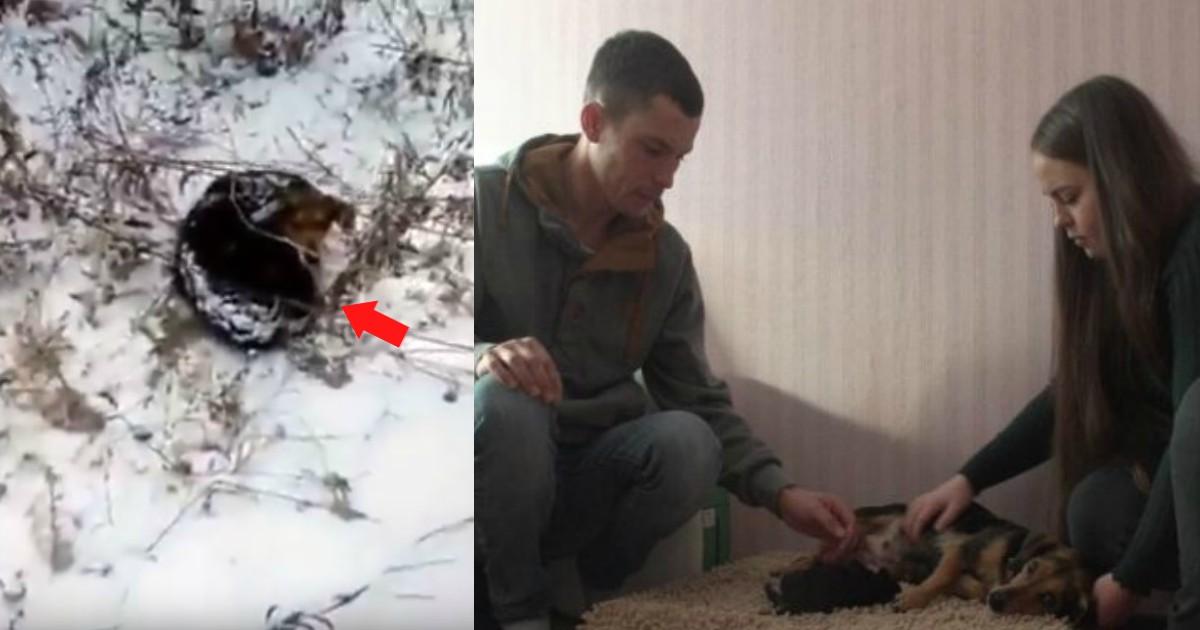 В лесу собака отчаянно пыталась согреть своё единственное маленькое чудо… И вдруг появился парень на бульдозере, который всё порешал