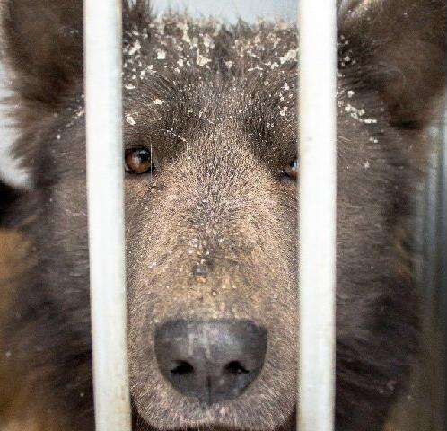 Челябинский приют ищет дом для собаки-медведя