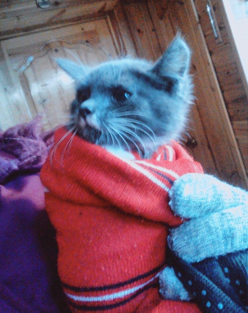 На дачу в области стали приходить котята с кошкой, голодные и слабые
