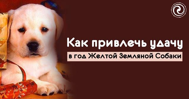 Как привлечь удачу в год Желтой Земляной Собаки