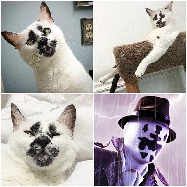 Кошка Роршаха