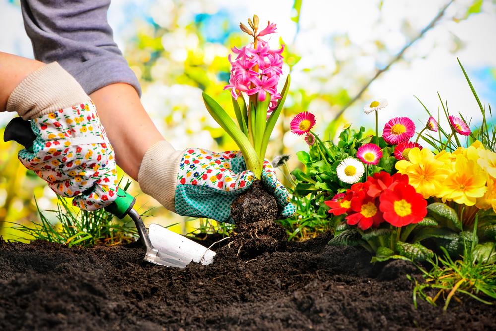 Это предостережение: если забудете об осторожности – можете сами загубить то, куда вложили много тру.сон словно говорит вам: растение — зеленое растение во сне предвещает заботы, после которых вы испытаете чувство глубокого удовлетворения.