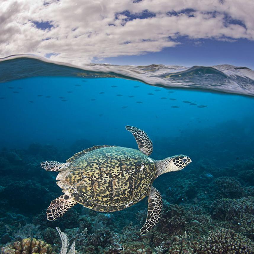 1358 Жизнь в океане   подводные фотографии Дэвида Флитэма