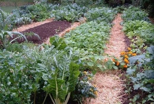 Овощи, которые следует посадить рядом друг с другом. Высокая урожайность гарантирована!
