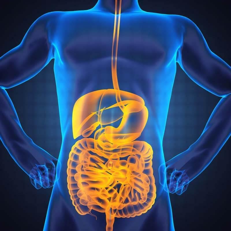 Жизненно важная связь между кишечником и здоровьем