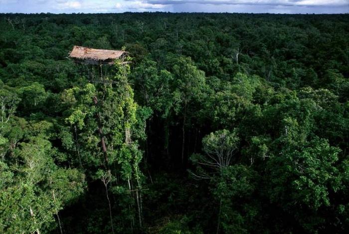 Дома располагаются высоко на деревьях