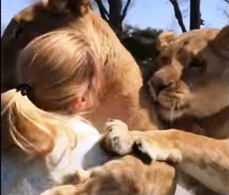 Когда-то давно она усыновила двух львят, но их забрали
