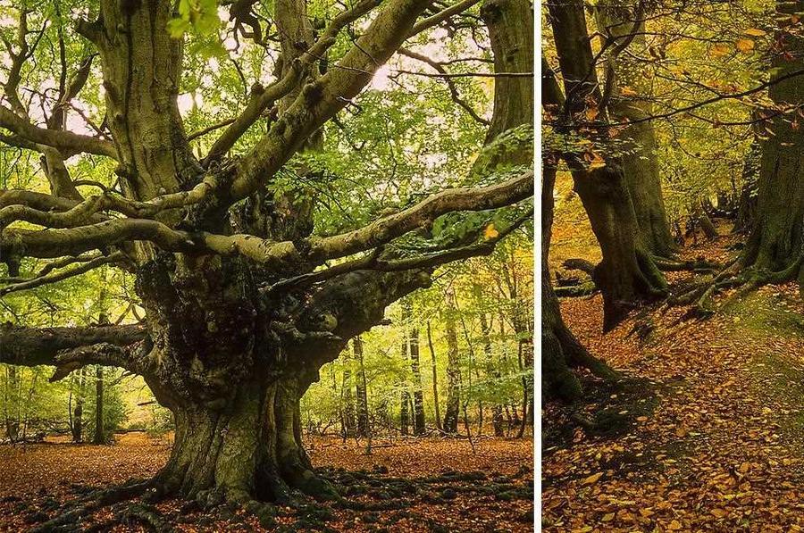 30 буковых лесов, которые об…
