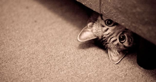 Найди кота! Тест на внимательность) Я нашла не везде)