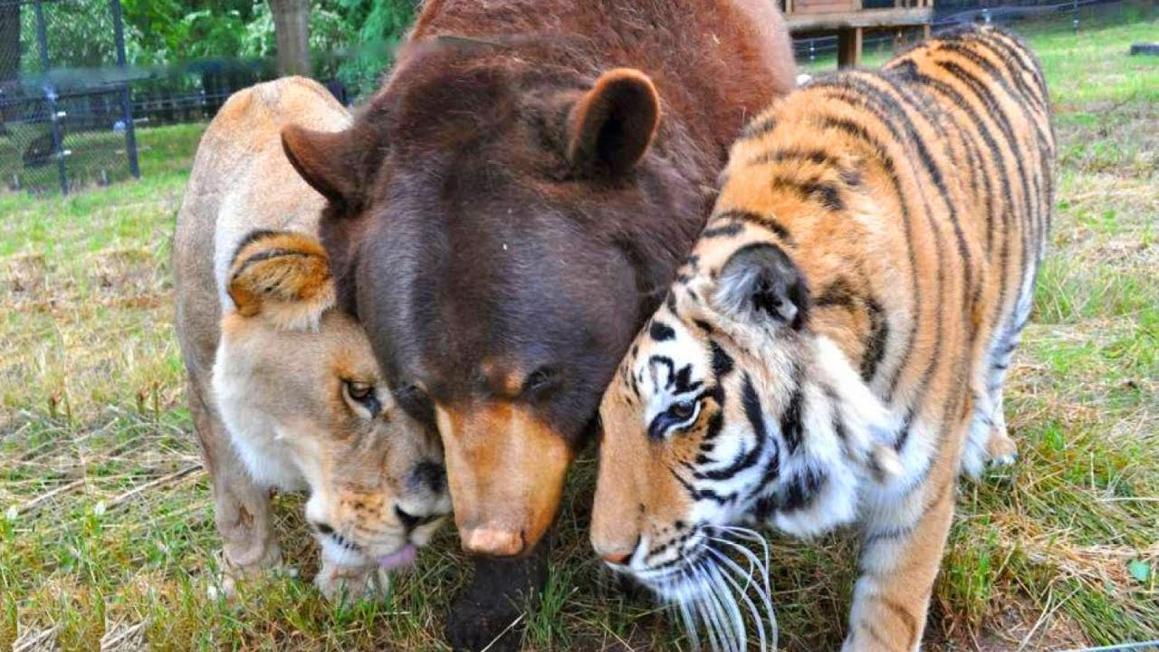 Удивительная дружба трех хищников