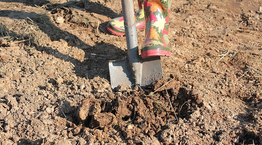 Вредна ли осенняя перекопка грядок для почвы?
