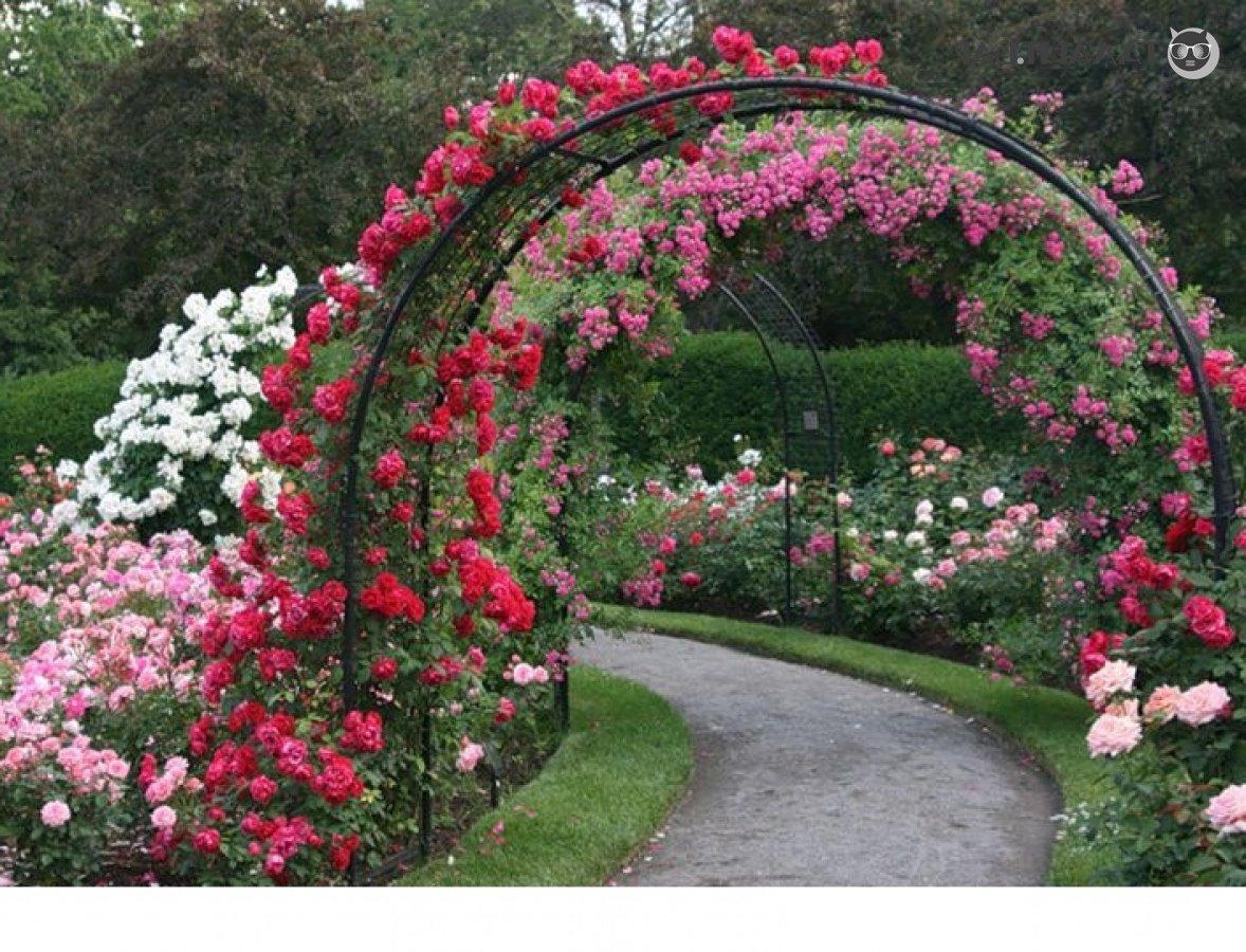 Декор сада розами