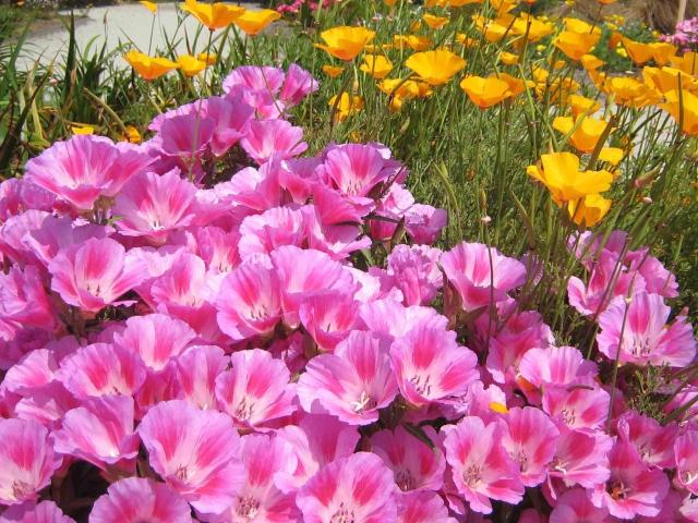 цветы веселые ребята фото на клумбе