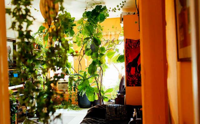 Прирожденная садовница: эта девушка вырастила в своей квартире 500 растений!