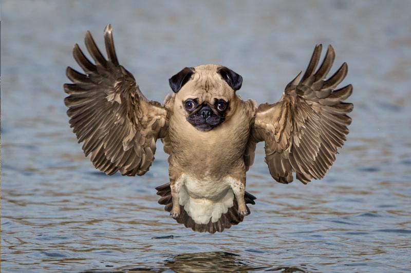 Рассекречены фото редких несуществующих животных спасённых в Японском море!