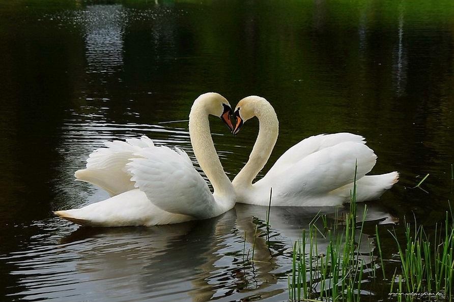 Удивительная история любви и верности