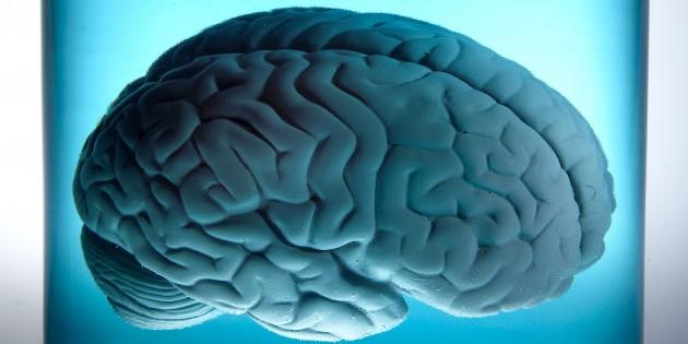 5 способов сохранить мозг молодым и здоровым