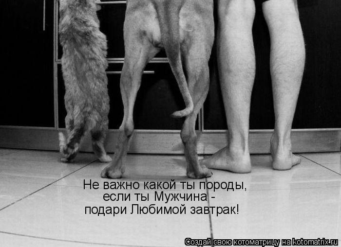 Котоматрица - Не важно какой ты породы,  если ты Мужчина -  подари Любимой завтрак!