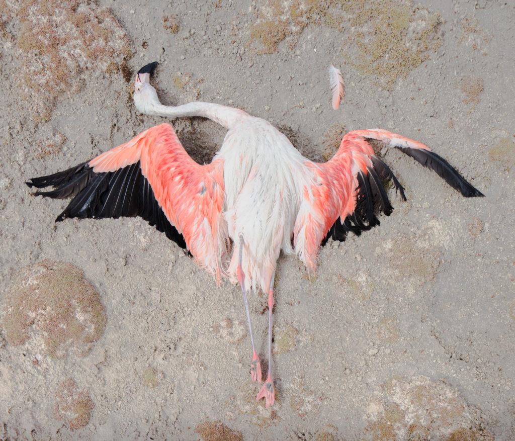 Сухой закон: как последние обитатели пустыни Атакама выживают без «права на воду»