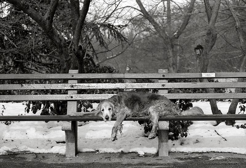 Купер (15 лет) собаки, фото собак, фотографии животных