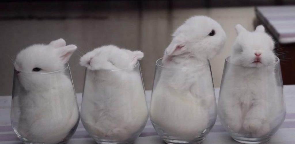 Белоснежные кролики-малютки которые похитят ваше сердце