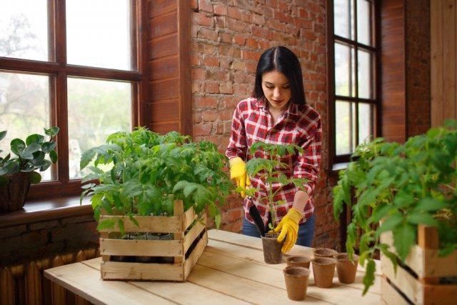 19 самых серьезных ошибок при выращивании рассады