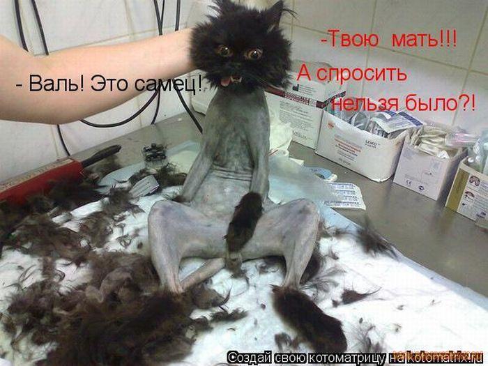 Наш кот не гадит в туфли – он брезгливый...)