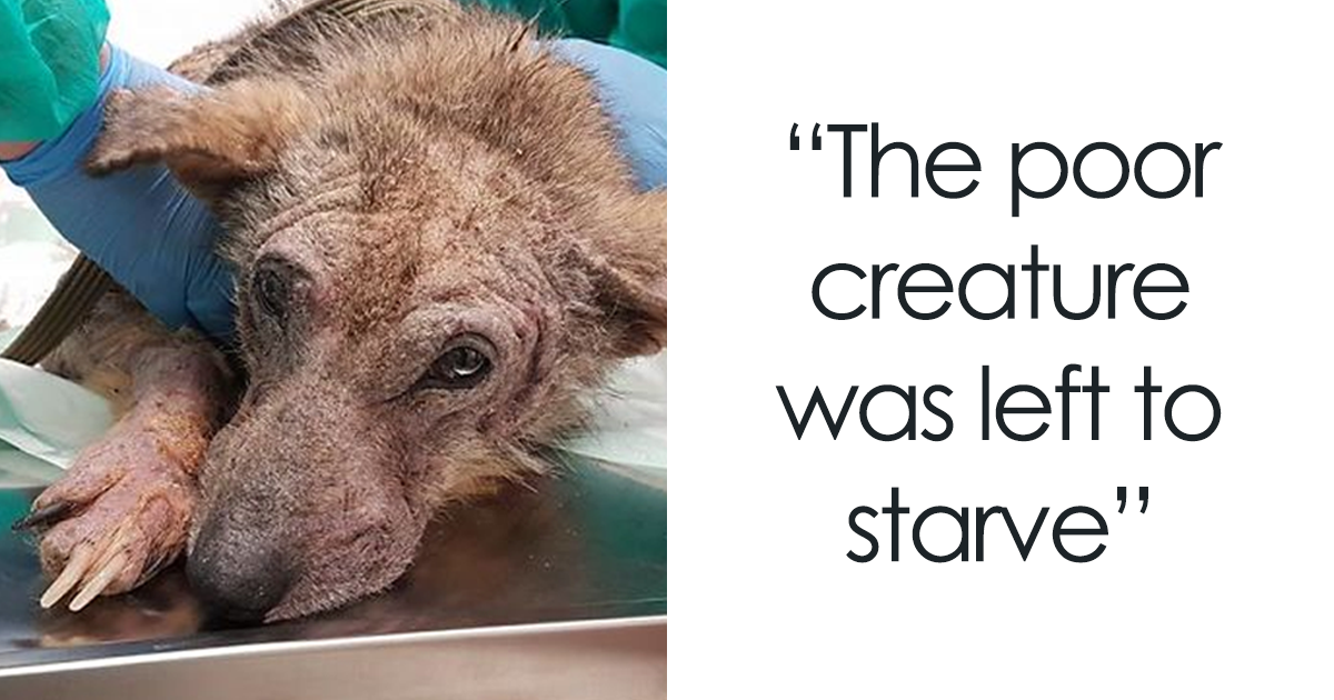 Dying Dog Left To Starve Defies All The Odds And Undergoes An Unbelievable Transformation