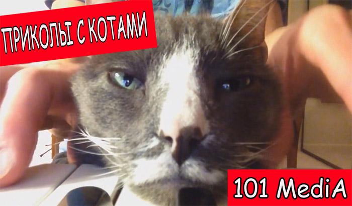 Подборка позитивных видео с котами и собаками.