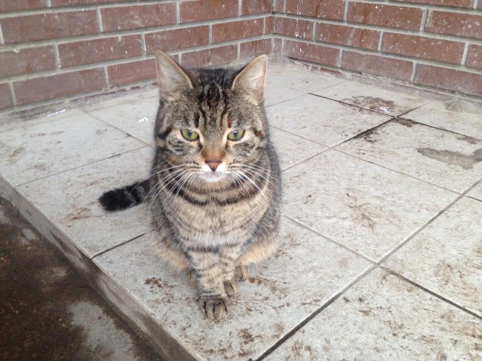 Москва! Люди завели собаку и выбросили на улицу своего друга - кошку. Ей срочно нужен дом, она в беде!!!