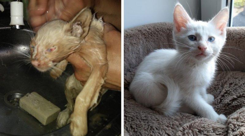 Грязный худой котенок приковылял к фотосалону, прося помощи