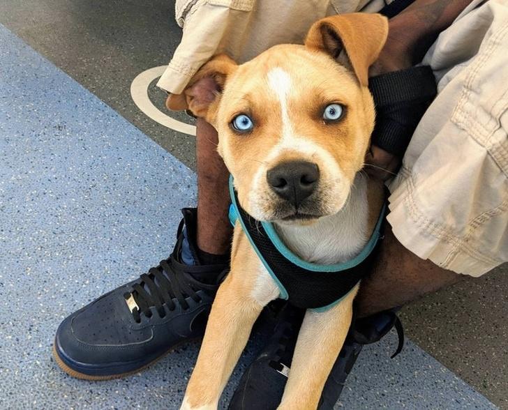 25 нечистокровных собак, которые покорят вас своим необычным видом (А вы уже видите черты знакомых пород?)