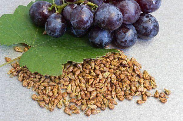Когда плодовые косточки полезнее, чем сами фрукты
