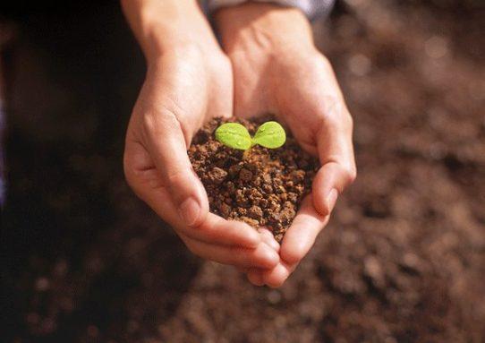 История о садовнике