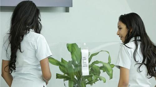 Эксперимент над растением
