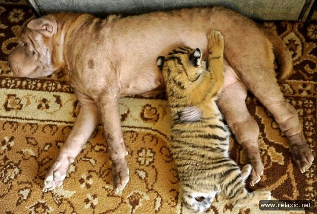 Животные и люди: лучшие фото-2012 (50 фото)
