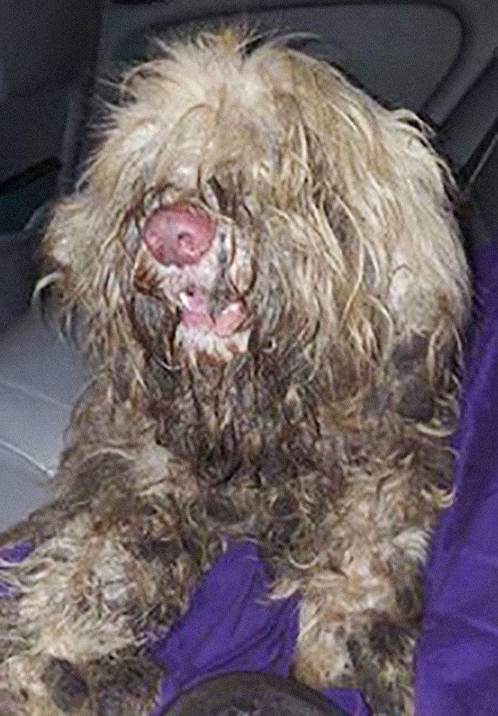 Добрые дела: грумер открыла собачий салон посреди ночи, чтобы спасти бездомного пса