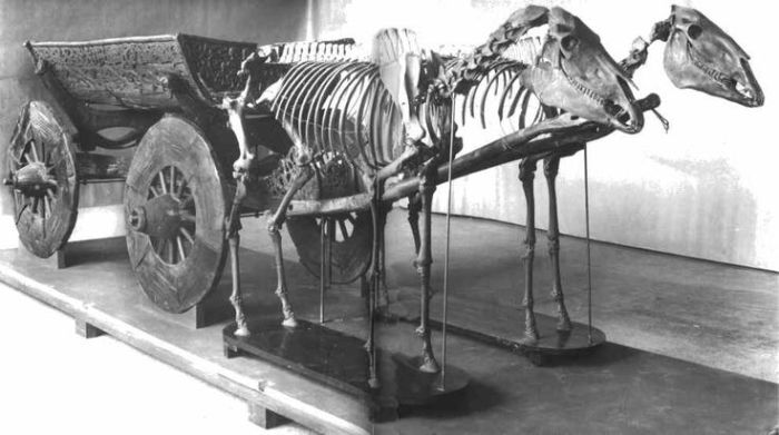 Повозка, запряженная лошадьми. Археологическая находка из кургана в Осеберге.   Фото: pinterest.com.