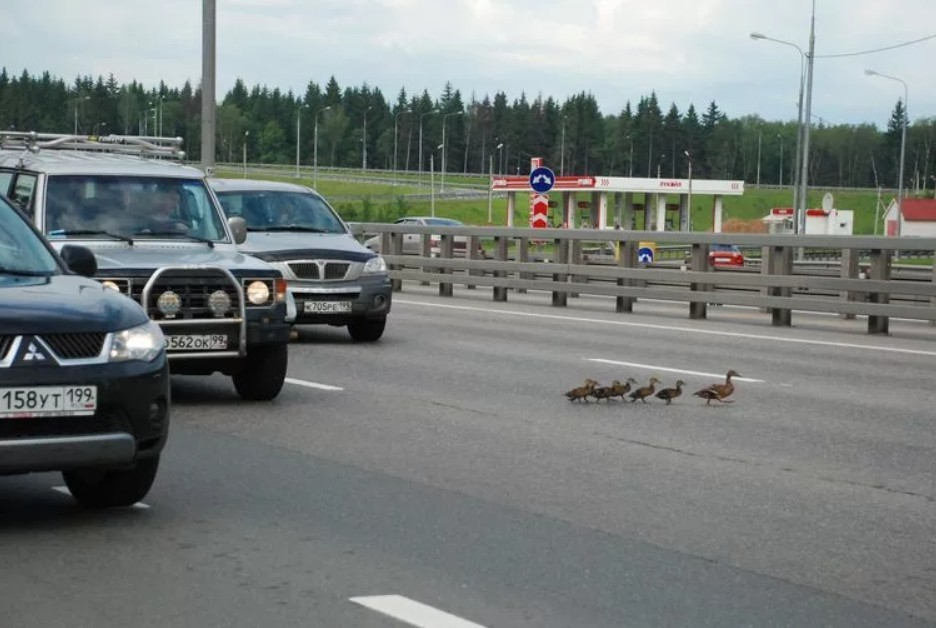 Будем внимательны на дороге...
