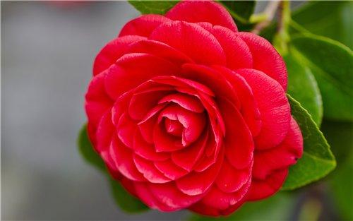 Все самые красивые цветы мира
