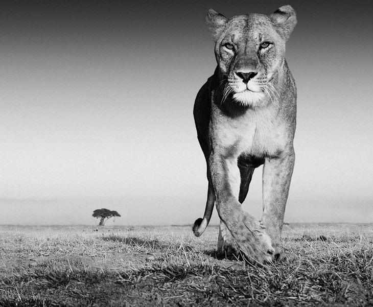 Великолепные снимки снимки животных от Дэвида Ярроу