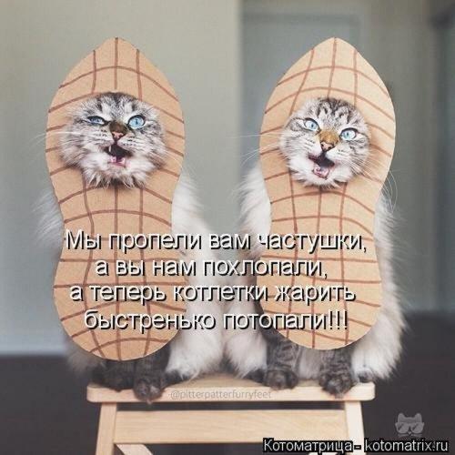 Уффф!!! Ну наконец-то! Шикарные котоматрицы для позитива, хорошего настроения и услады глаз