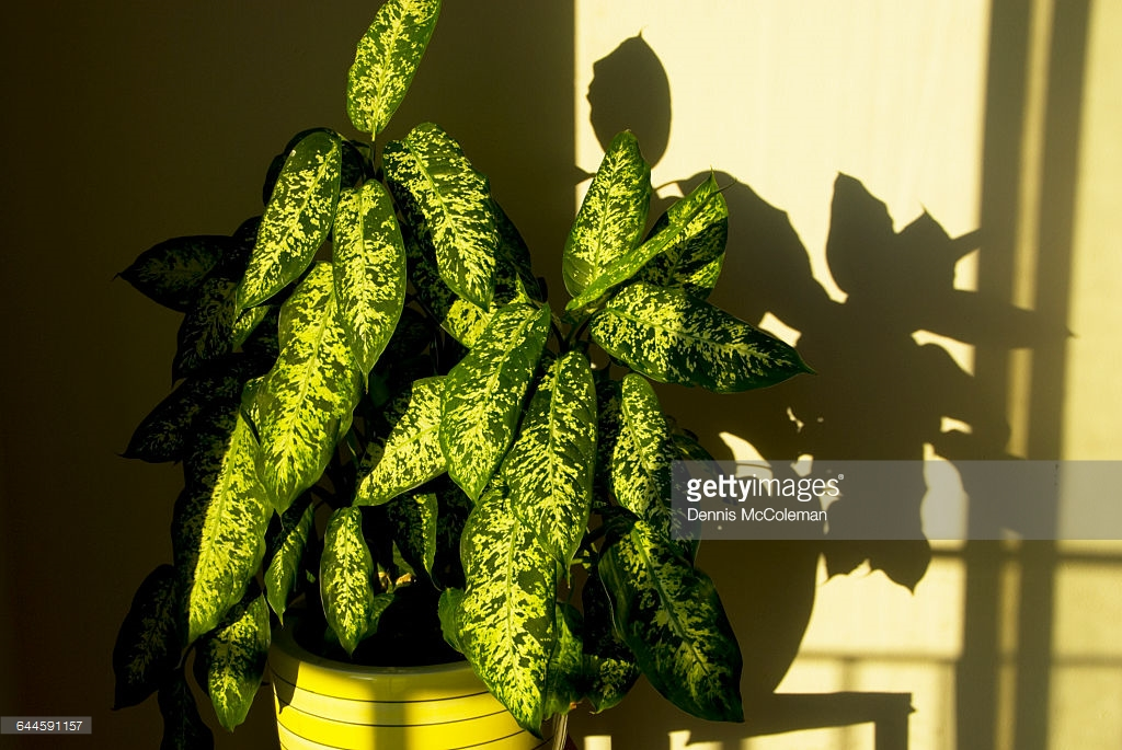 Ее дочь умерла, съев листик этого домашнего растения, безутешная мать предупреждает других родителей