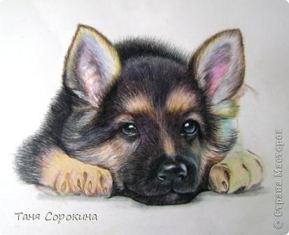 Картина панно рисунок Рисование и живопись Тренируюсь на щенках  Пастель фото 6